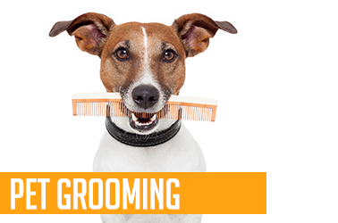 Pet Grooming Styling Scissor Sharpening